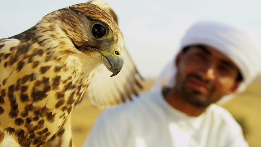Close up Arab male traditional white headdress with trained falcon on gloved wrist desert location shot on RED EPIC, 4K, UHD, Ultra HD resolution