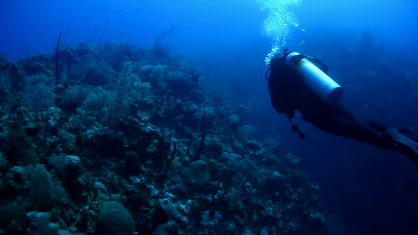 Diving on the reefs of Grand Cayman