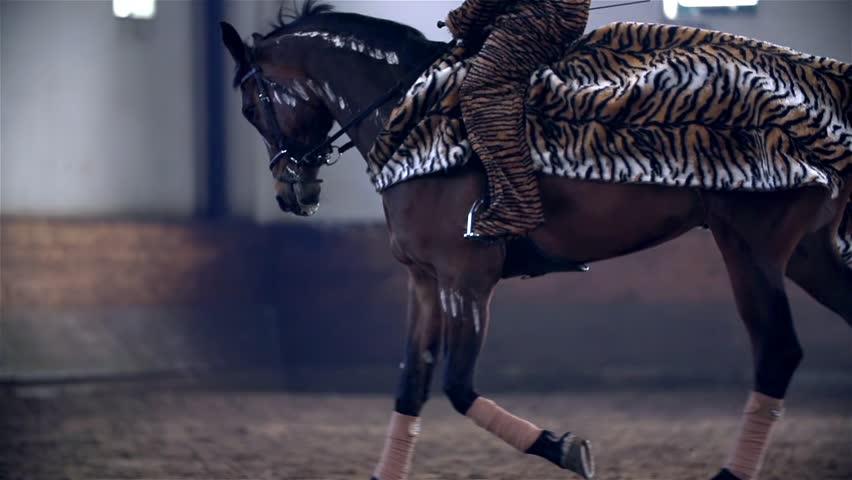 Tiger Horse Costume Tiger Dressed Horse