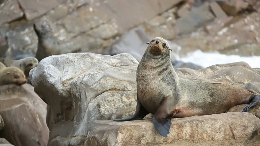 Closeup of sea lion standing over the rock