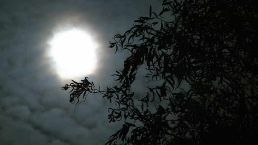 Full moon on cloudy night with willow tree leaves blowing in wind. - HD stock video clip