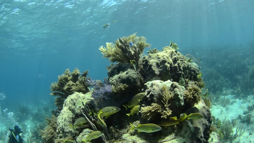 caribbean coral reef. - HD stock footage clip