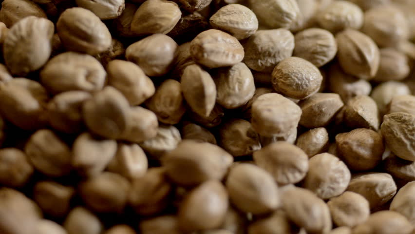 Hemp or Cannabis seeds, pouring