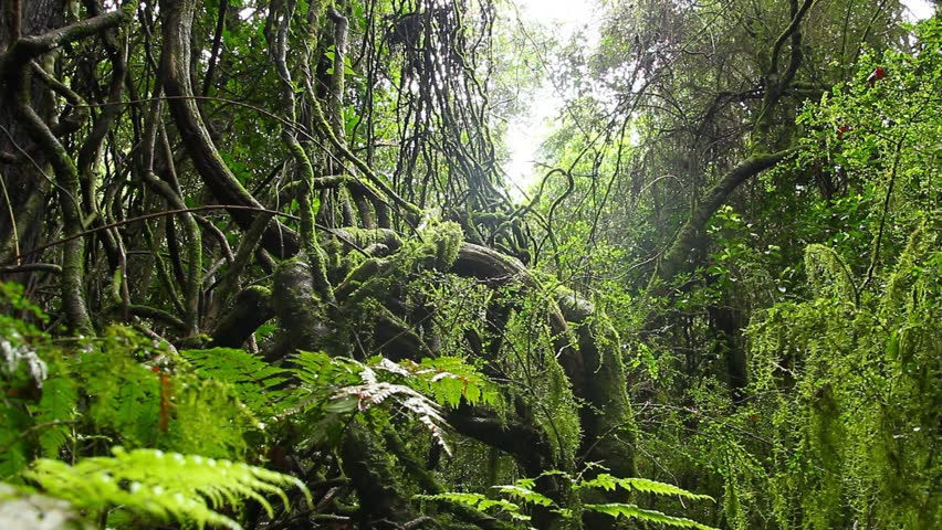 Tree vines rainforest australian landscape this for Forest floor definition