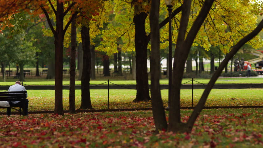 Wide Shot Pan Rear view of man sitting on bench in park in Fall colors, Washington D.C, USA