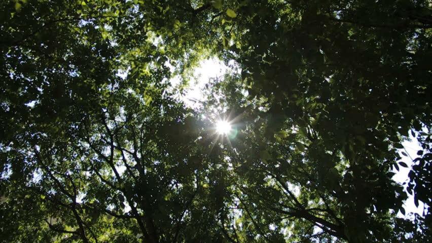 Walking down the tree in daylight