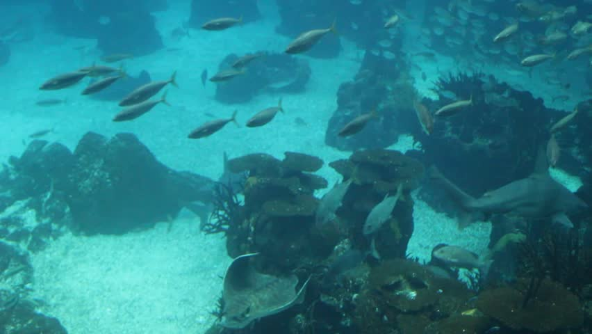 Underwater scene with coral fish, sharks, manta rays and a shoals swimming. Aquarium set. - HD stock footage clip
