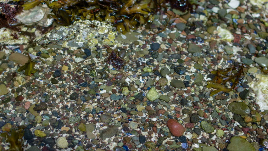 A Small Tide Pool  |Pacific Northwest Tide Pool
