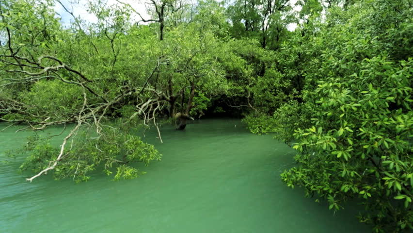 Tropical Mangrove Forest Protect Coastal Areas From ...  Tropical Mangro...