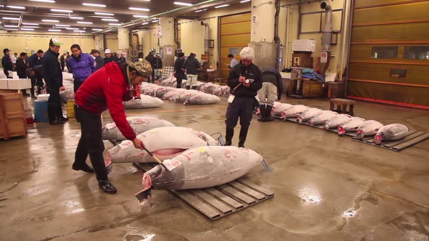 TOKYO, JAPAN - CIRCA APRIL 2014: Japanese people, clients, customers examining the frozen fish catch at the tuna auction. Tsukiji fish market circa April 2014 in Tokyo, Japan, Asia - HD stock footage clip