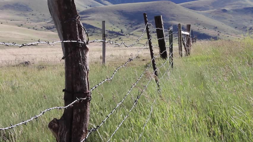 Prairie grasses wave in the breeze near an old barbed wire