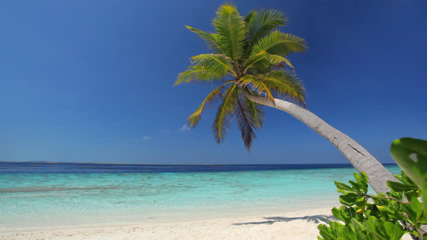 lonely palmtree on beach with turquoise lagoon