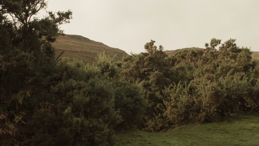 Elegant Countryside Landscape HD Stock Footage. Elegant and serene Moorland landscape with thick foliage in the foreground. Filmed on the Blackmagic Cinema Camera.