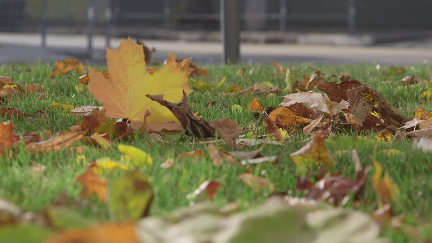 Fallen autumn leaves on a green lawn in the city - HD stock video clip