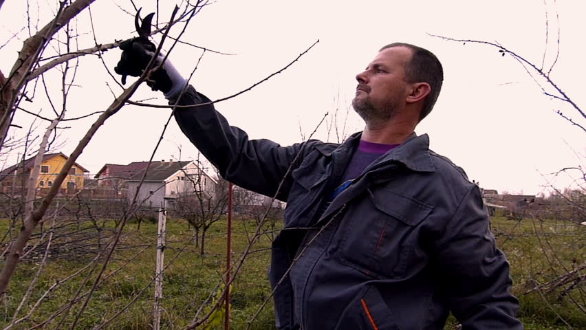 Winter fruit pruning. High speed video,slow motion camera. - HD stock footage clip
