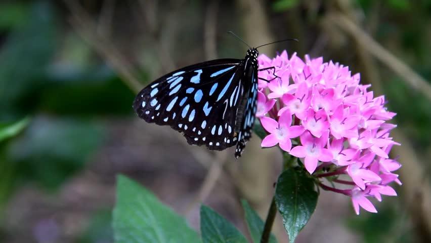 blue butterfly wings side view