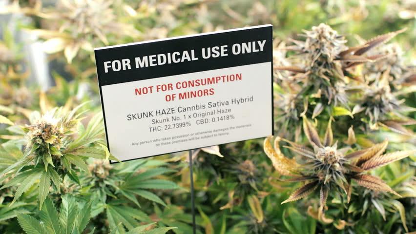 Medical marijuana dispensary grow garden