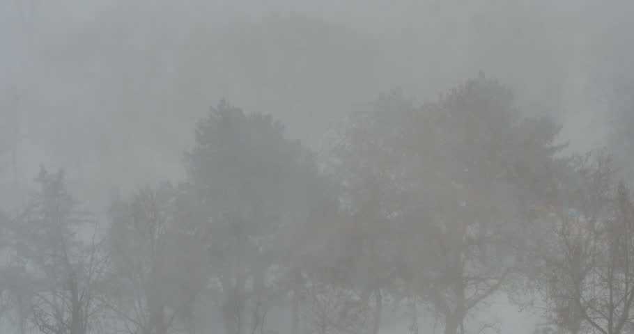 Snow falling in winter forest.  4K UHD. - 4K stock video clip