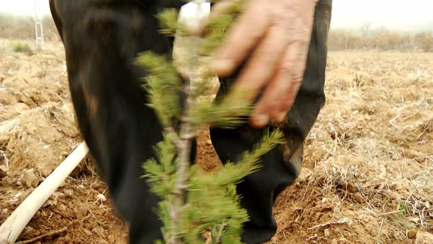 Seedling Cultivation