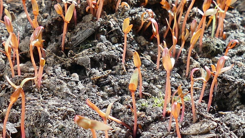 Young seedlings just sprouting flowers.