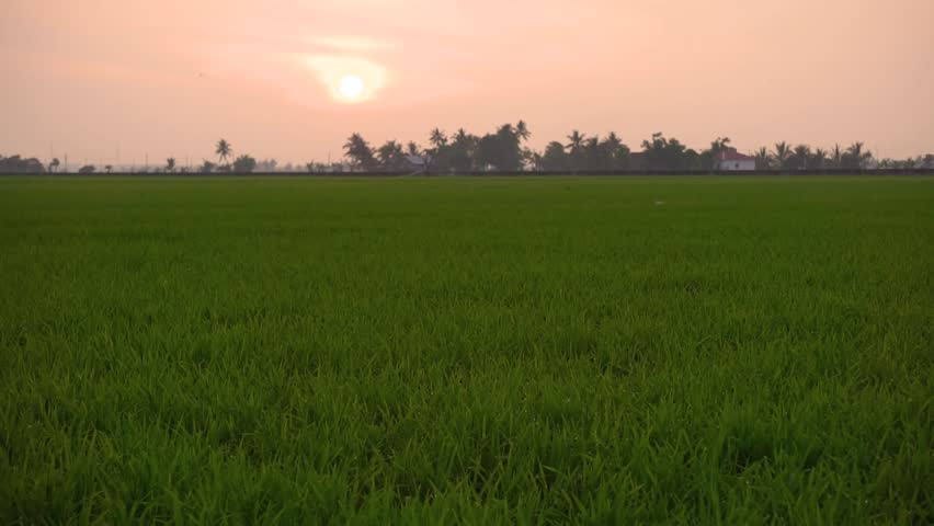 Sunset Over Paddy Fields